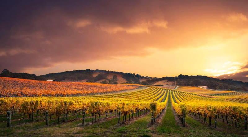 Barossa valley SA