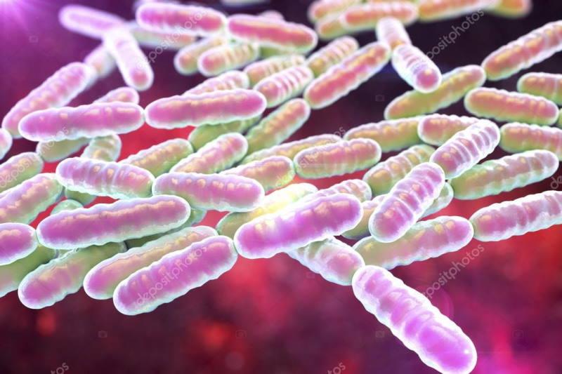 Gerald Quigley, on probiotics Pharmacist and Master Herbalist
