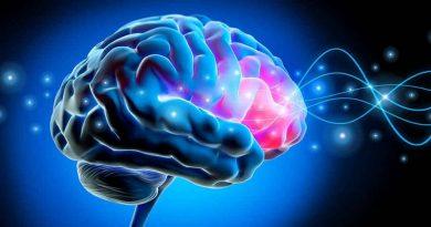 Healthy Brain Gerald Quigley Banyule Community News