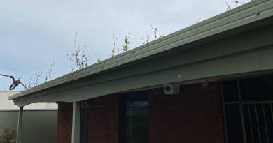 editors rooftop garden