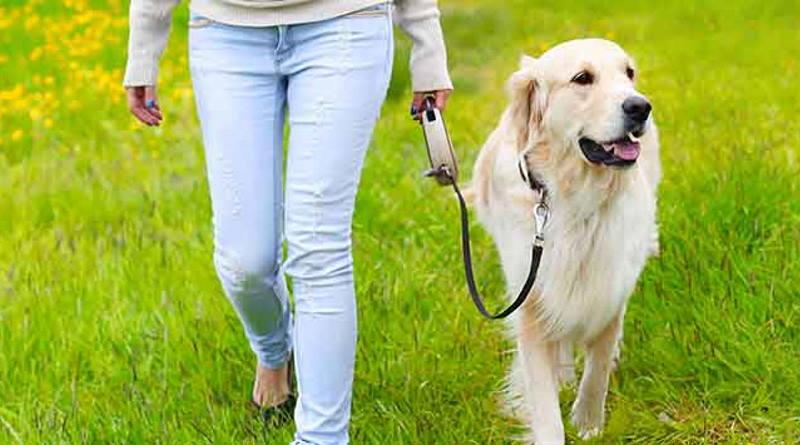 walking a dog in banyule